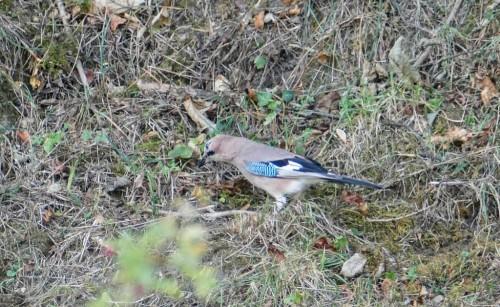 oiseaux-108d4a9.jpg