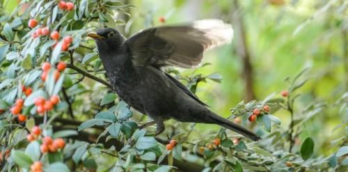 oiseaux-1197591.jpg