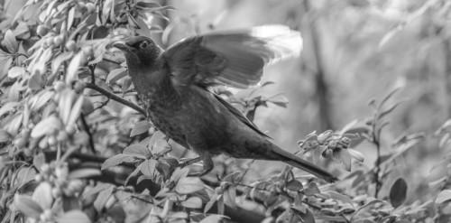 oiseaux-12c62fc.jpg