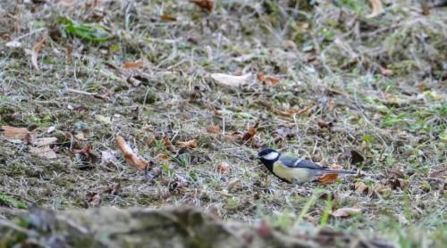oiseaux-13d1bd6.jpg