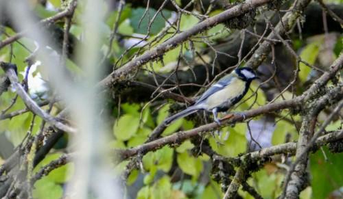 oiseaux-149ef4b.jpg