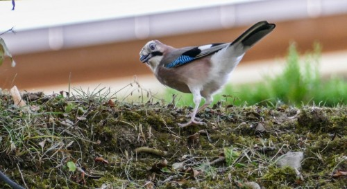 oiseaux-268ee3.jpg