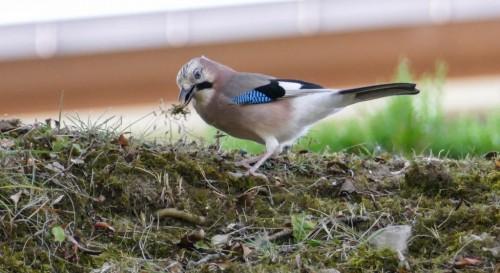 oiseaux-34115a.jpg