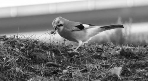 oiseaux-4ef9fa.jpg