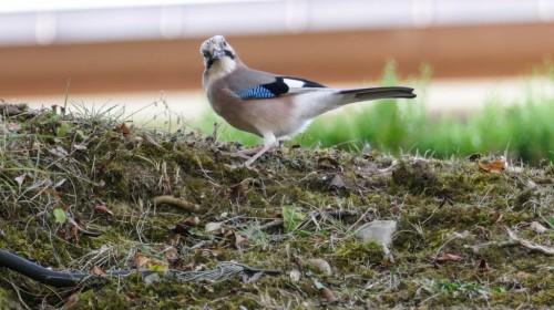 oiseaux-535fde.jpg