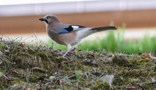 oiseaux-628b0c.jpg