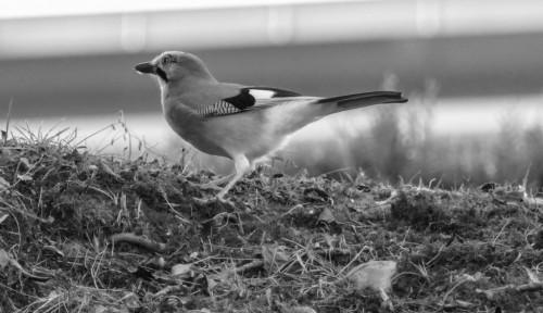 oiseaux-738184.jpg