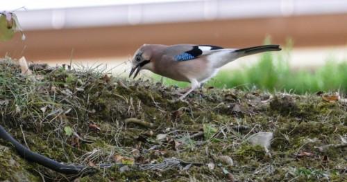 oiseaux-88019e.jpg