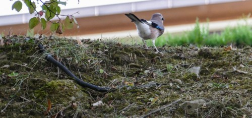 oiseauxd5788.jpg