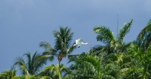 Miami-430e981.jpg